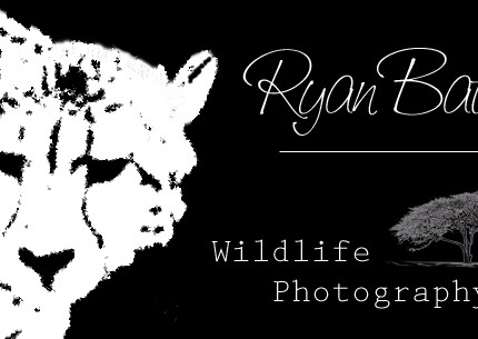 Ryan Bates Wildlife Photography Logo